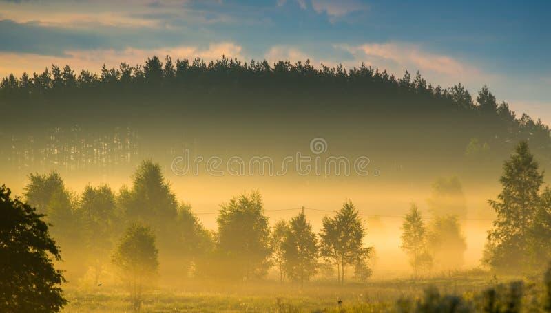 Beau paysage de nature avec la brume orange images libres de droits