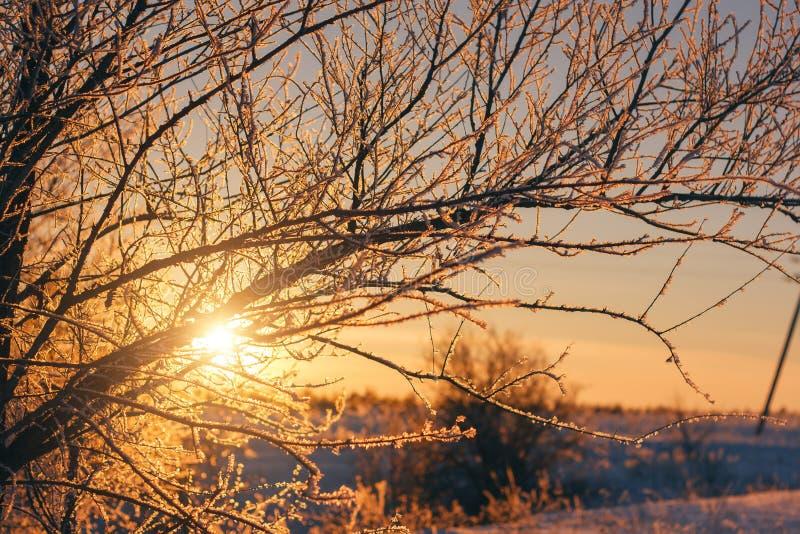 Beau paysage de nature d'hiver coucher du soleil par l'arbre de neige image stock
