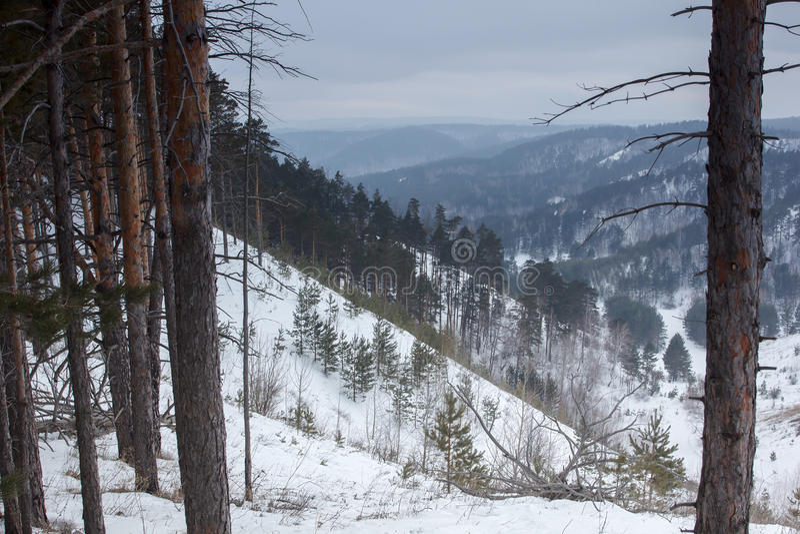 Beau paysage de nature d'hiver Forêt de montagne de neige photographie stock libre de droits