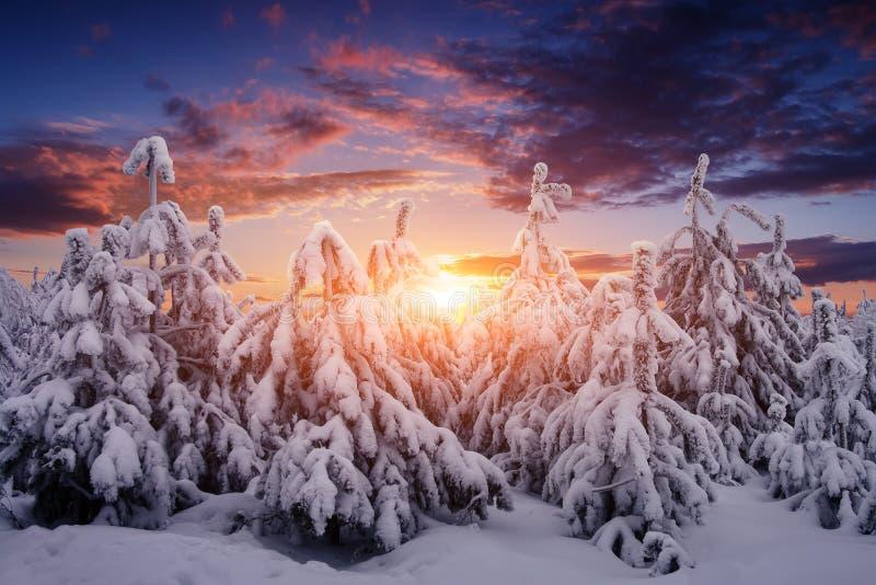 Beau paysage de nature d'hiver Les arbres ont couvert la neige images libres de droits