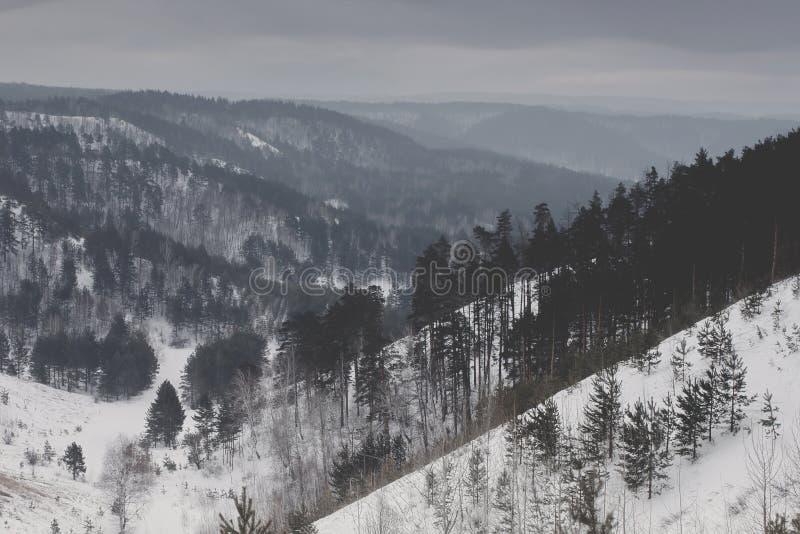 Beau paysage de nature d'hiver Montagnes de forêt images libres de droits