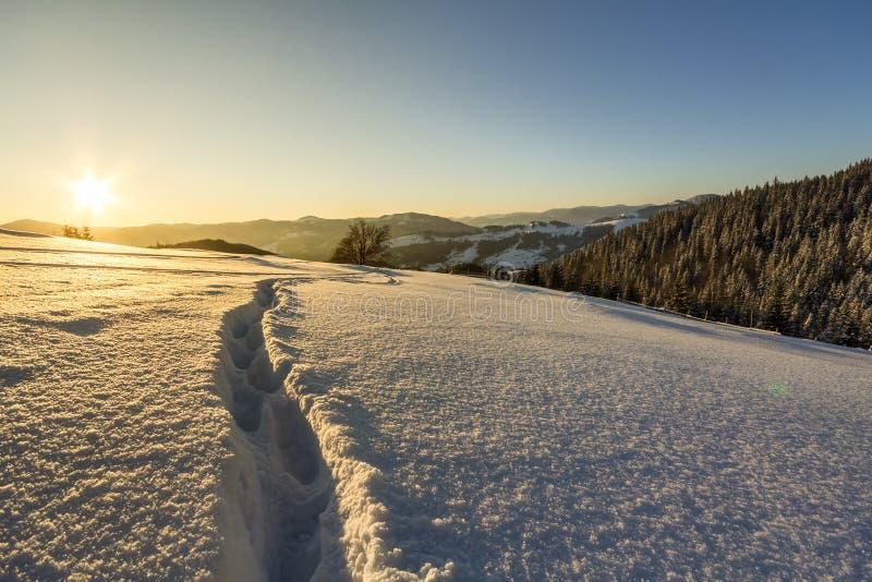 Beau paysage de No?l d'hiver Chemin humain de voie d'empreinte de pas dans la neige profonde blanche en cristal par le champ vide photographie stock