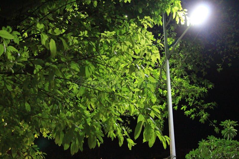 Beau paysage de nuit photo stock