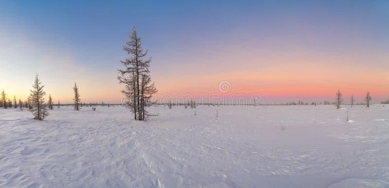 Beau paysage de panorama d'hiver avec les arbres couverts image libre de droits