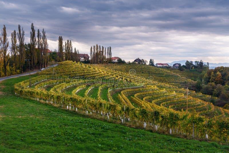 Beau paysage de vignobles de Jeruzalem sur les collines slov?nes Ljutomer La Slov?nie du nord-est photo libre de droits