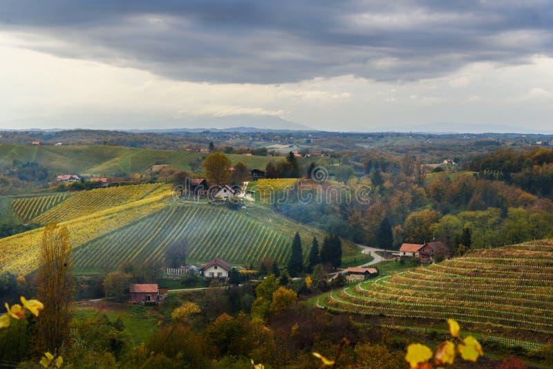 Beau paysage de vignobles de Jeruzalem sur les collines slov?nes Ljutomer La Slov?nie du nord-est photographie stock