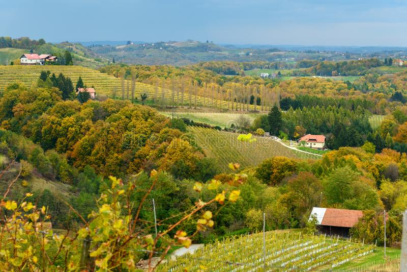 Beau paysage de vignobles de Jeruzalem sur les collines slov?nes Ljutomer La Slov?nie du nord-est photo stock