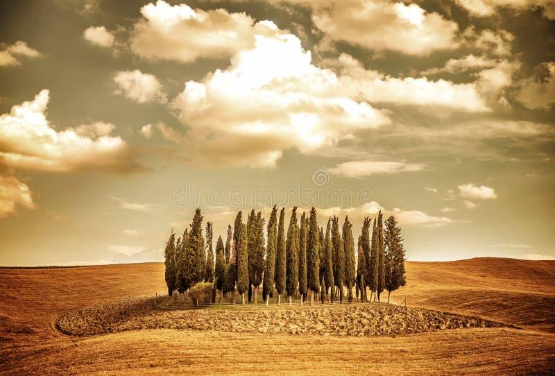 Beau paysage de vinatge d'automne images libres de droits