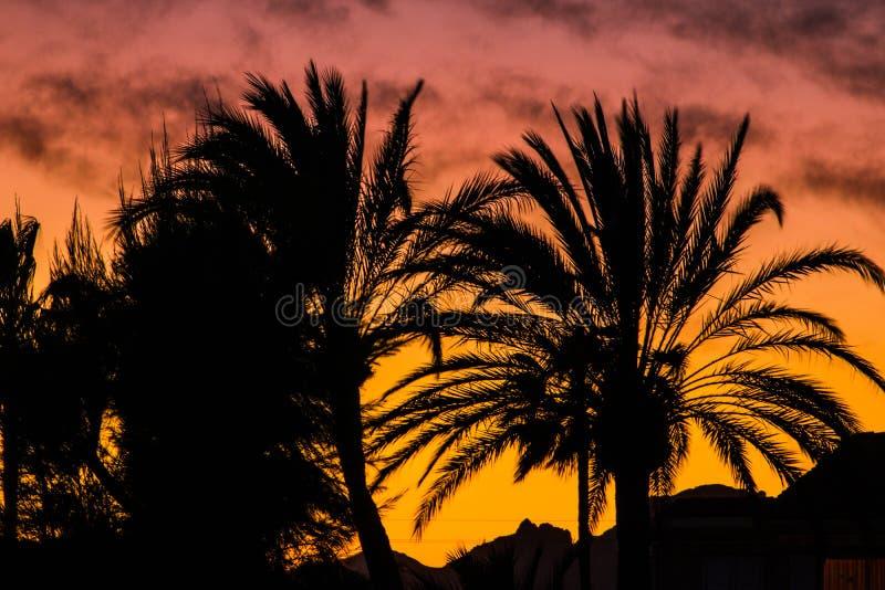 Beau paysage des palmiers contre la lumière au coucher du soleil photographie stock libre de droits