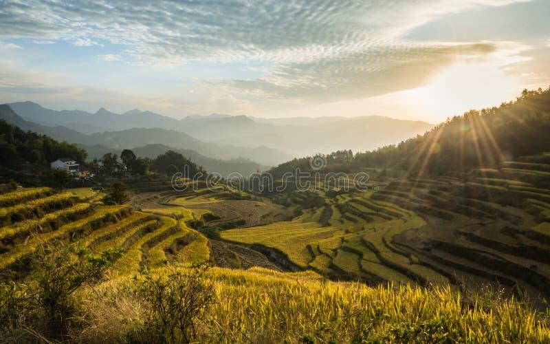 Beau paysage des terrasses de riz en Chine images libres de droits