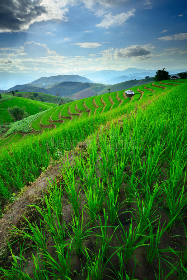 Beau paysage des terrasses et de la montagne de riz photos libres de droits
