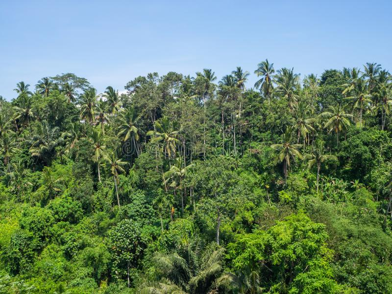 Beau paysage en Indon?sie images stock