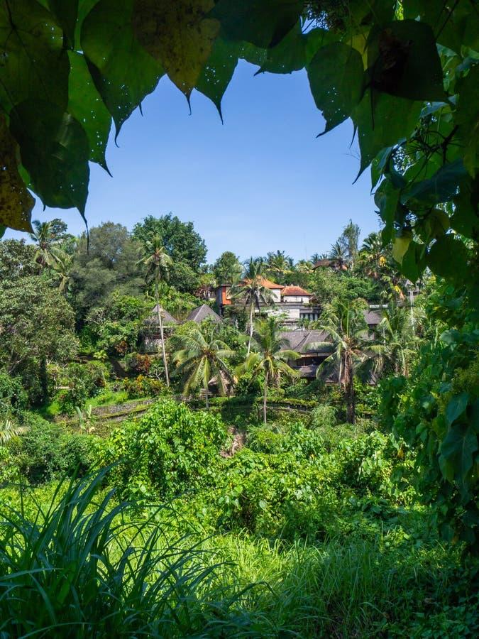 Beau paysage en Indon?sie photo libre de droits