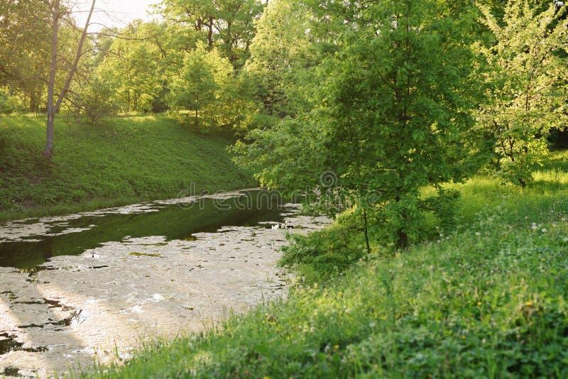 Beau paysage en revanche de l'eau de floraison en ressort en retard photos libres de droits