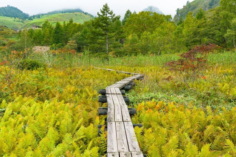 Beau paysage japonais de campagne avec le chemin en bois photo stock