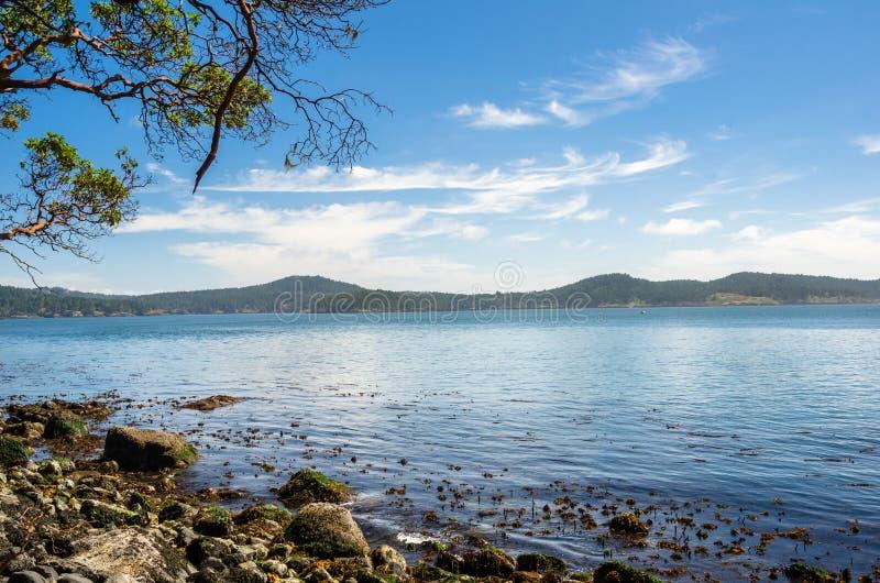 Beau paysage marin le long de la côte de l'île de Vancouver un matin d'été photo libre de droits