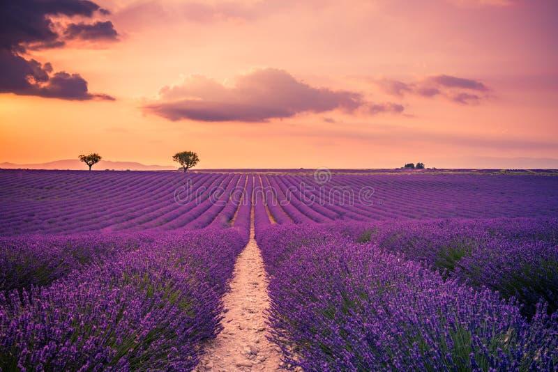 Beau paysage Paysage merveilleux de coucher du soleil d'été de gisement de lavande près de Valensole La Provence, France images stock