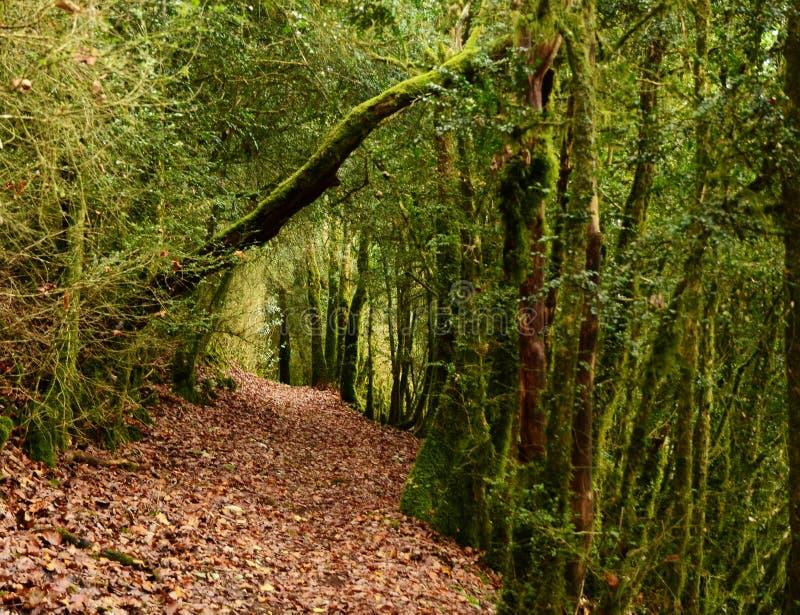 Beau paysage moussu mystique de for?t, France photos stock