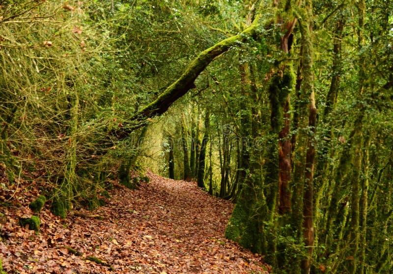 Beau paysage moussu mystique de for?t, France photo stock
