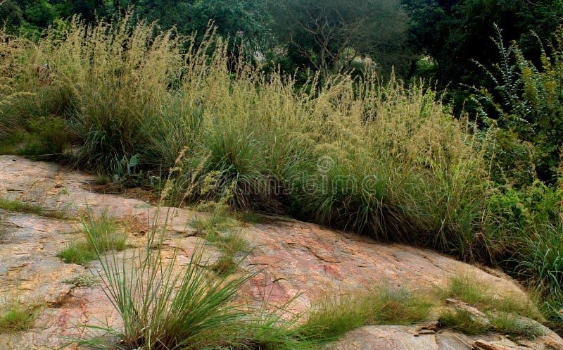 Beau paysage naturel avec des roches d'herbe et de colline images libres de droits