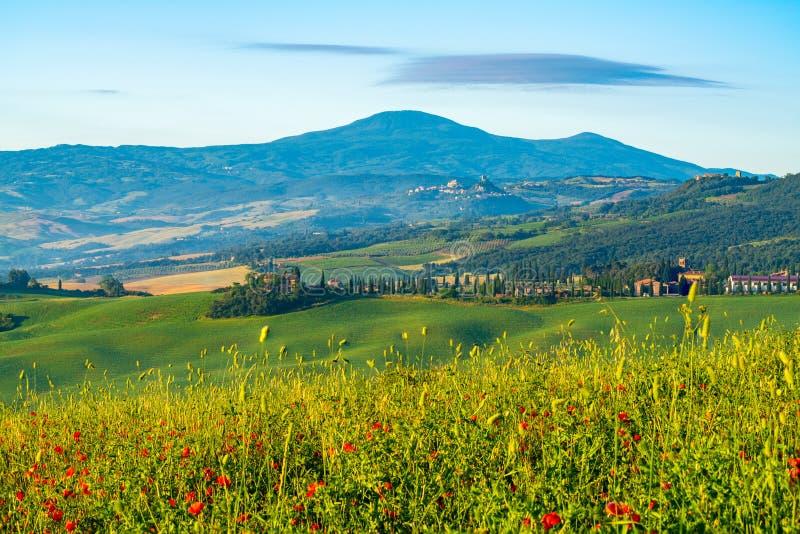 Beau paysage naturel de Hilly Tuscan Field verte dans le résumé image libre de droits