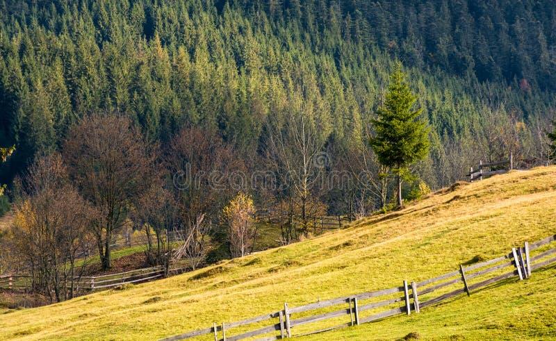 Beau paysage rural avec la barrière sur le flanc de coteau herbeux photo stock