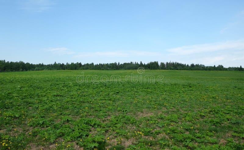 Beau paysage rural avec le fielm vert et la forêt au ciel bleu d'espace libre lointain d'unfer en été photo stock