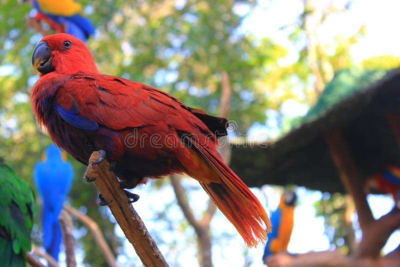 Beau perroquet photos libres de droits