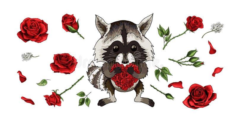Beau personnage de dessin animé animal de raton laveur avec les roses rouges réglées d'isolement sur le blanc illustration libre de droits