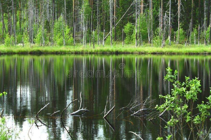 Beau petit lac dans la for?t fra?che verte image stock