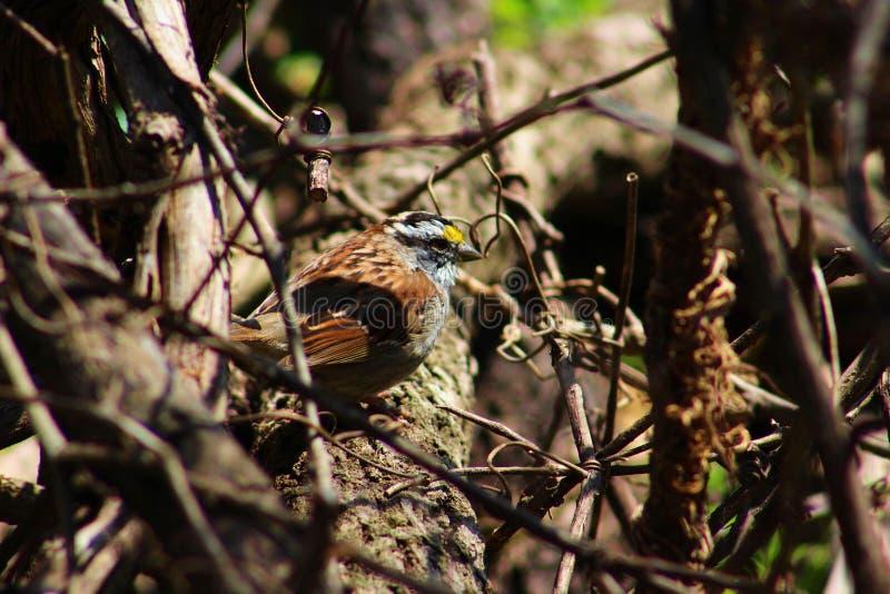 Beau petit oiseau photographie stock