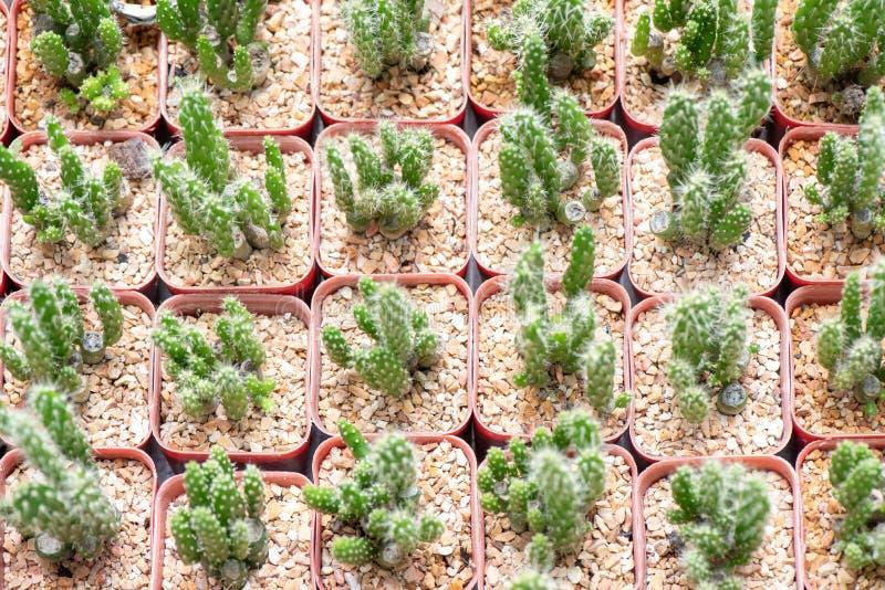 Beau plan rapproch? de fleur de cactus de d?sert photo libre de droits