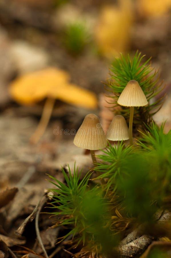 Beau plan rapproch? des champignons de for?t photo libre de droits
