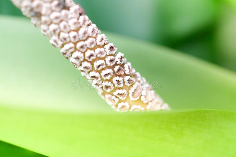 Beau pollen de fleur fleurissant dans le jardin vert avec l'espace de copie C'est une vue gentille de nature photographie stock libre de droits