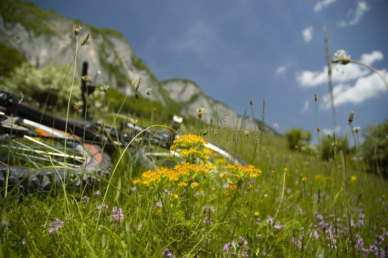 Beau pré avec les fleurs et la bicyclette photos libres de droits