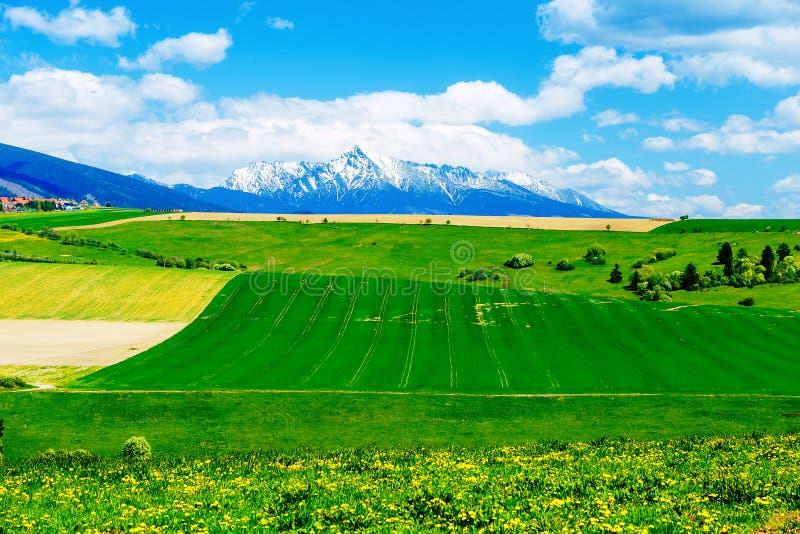 Beau pré de paysage, vert et jaune avec le champ et la montagne et le village de neige image stock