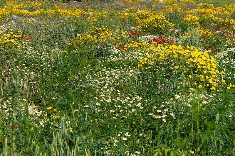 Beau pré de ressort, paysage sicilien, Mazzarino, Caltanissetta, Italie, l'Europe images stock