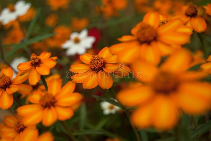 Beau pré fleuri photographie stock libre de droits