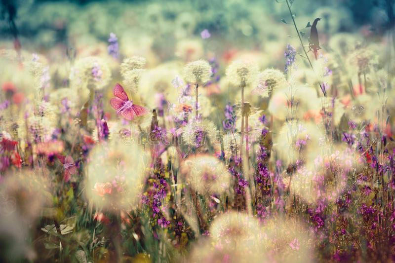 Beau pré - fleurissant, le pré de floraison fleurit image stock
