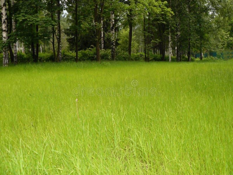 Beau pré vert parmi les grands arbres images stock