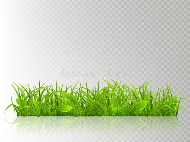 Beau réaliste a détaillé l'herbe verte fraîche, d'isolement sur le fond transparent Objet de ressort ou d'été prêt à employer illustration stock