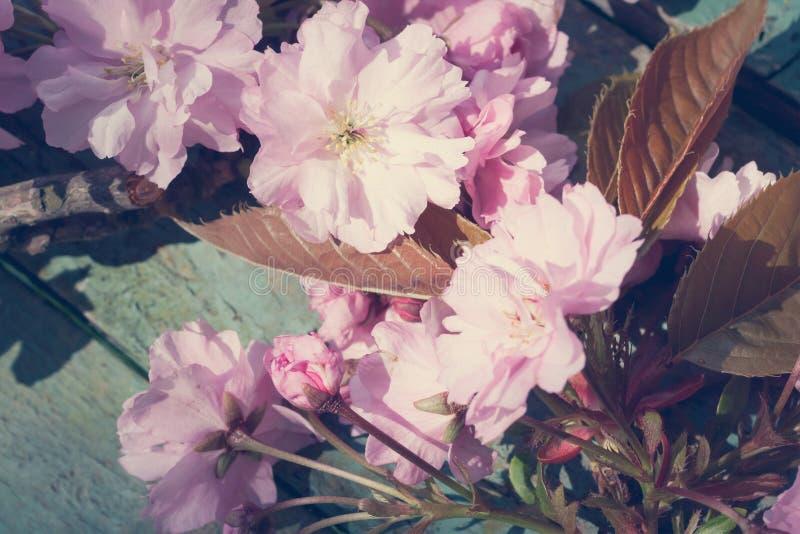 Beau, ressort, fond rustique avec la fleur rose et japonaise d'arbre photographie stock