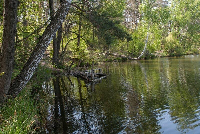 Beau rivage du lac de forêt photo stock