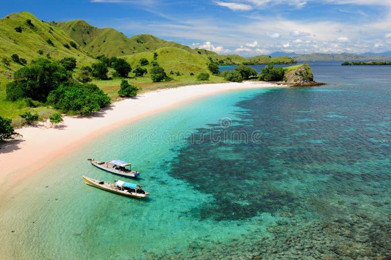 Beau beau rose en Indon?sie images libres de droits