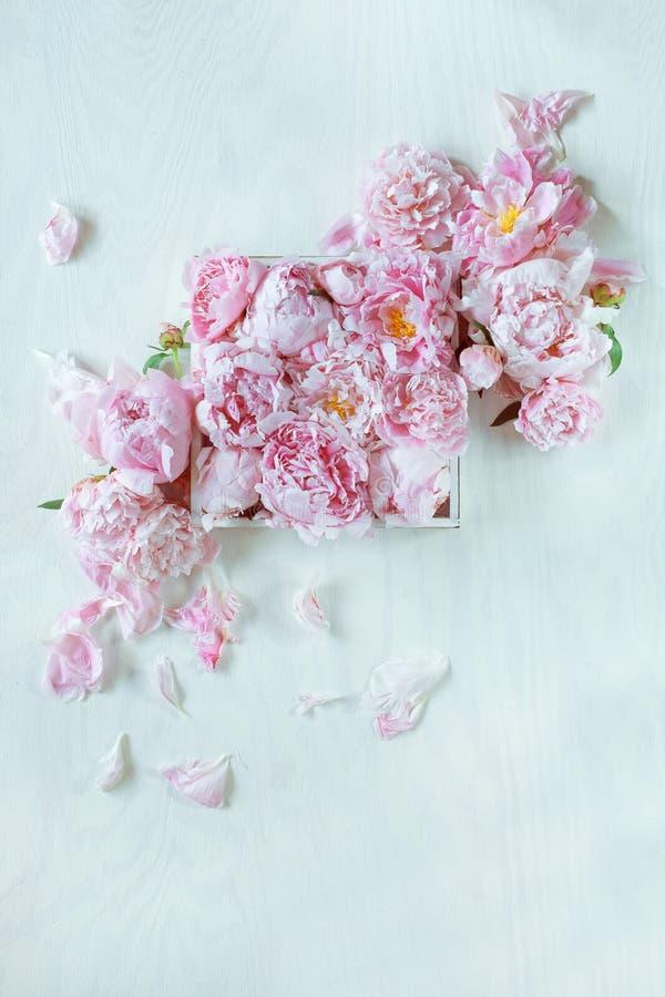 Beau rose, pivoines roses décorées sur la table en bois blanche photo stock