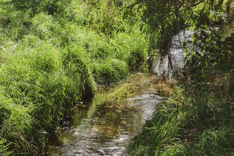Beau ruisseau à la lumière du soleil images libres de droits