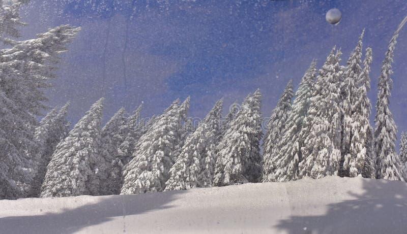 Beau sapin Milou d'abrégé sur hiver images libres de droits