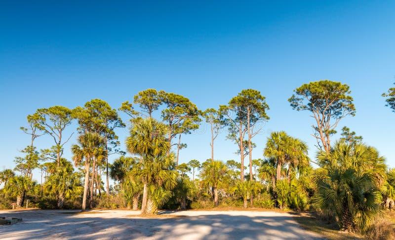 Beau scénario des Caraïbes Pinewood et ombres d'arbre au crépuscule image libre de droits