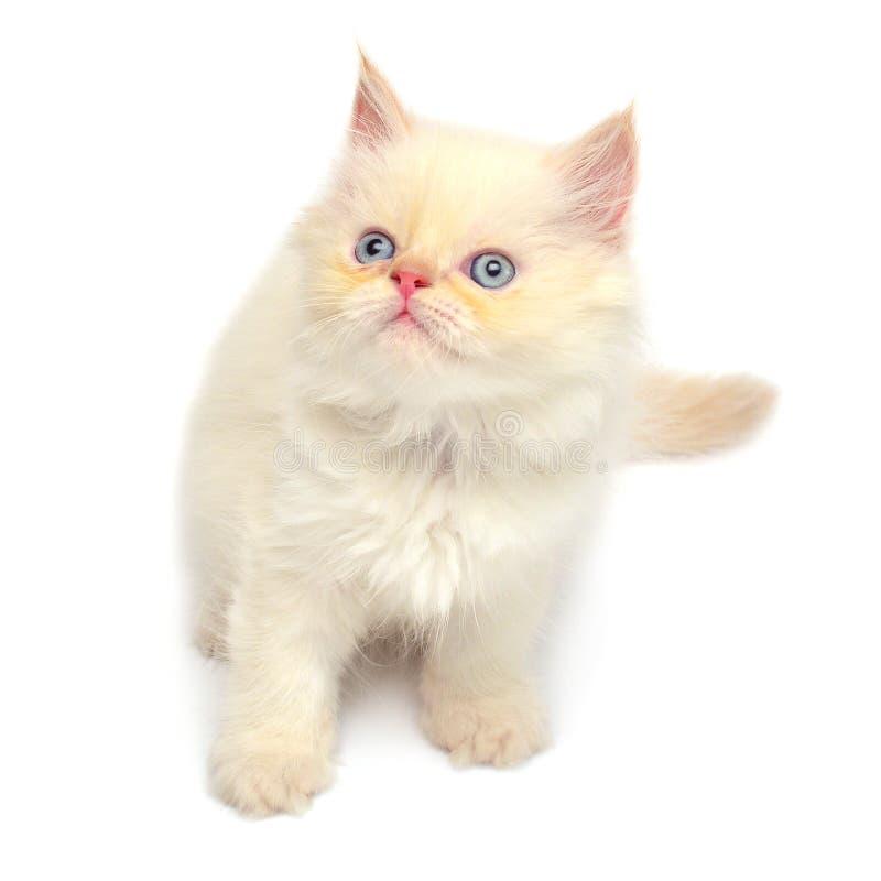 Beau se reposer espiègle crème de chaton photographie stock libre de droits
