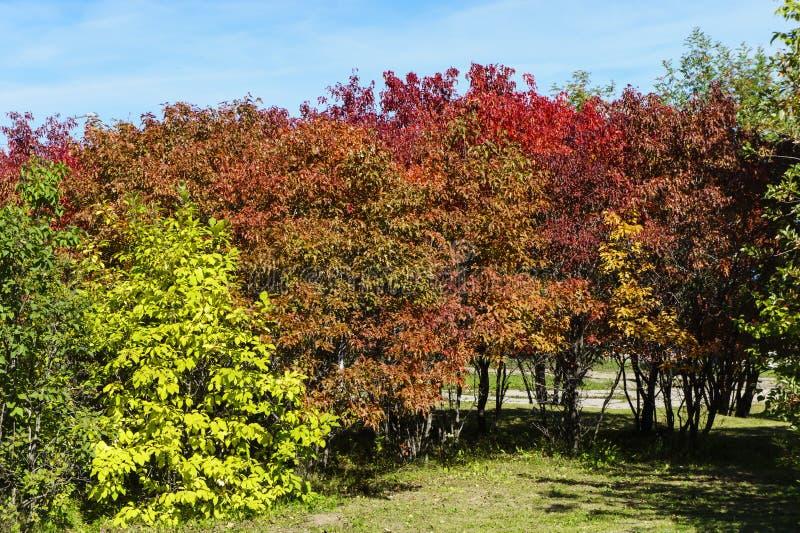 Beau stationnement d'automne photographie stock libre de droits